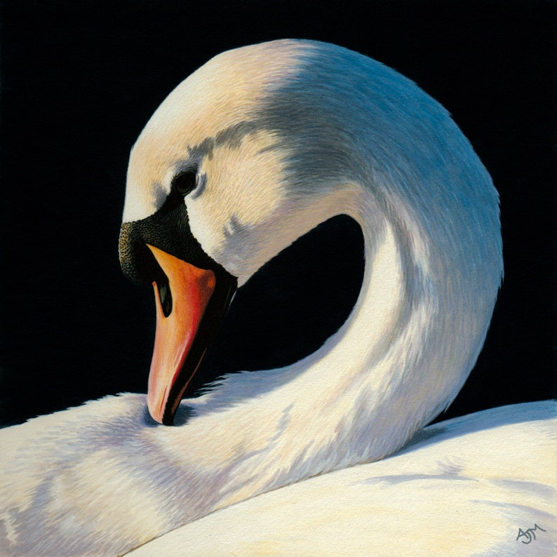 Mute Swan Limited Edition Print image 0