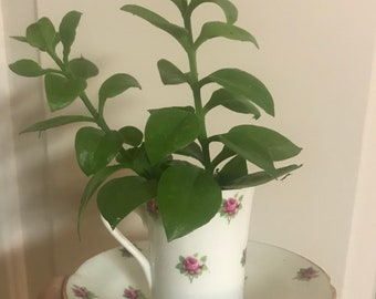 Vintage Fine English Bone China Teacup with Red Ice Plant