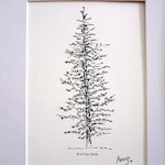 "Evergreen Pine Tree Art, Spruce Tree, Forest, Woodland, Nature, Gift Idea, Black, Ink Pen,Illustration, Drawing, 5"" x 7"", Decor, Wall Art"
