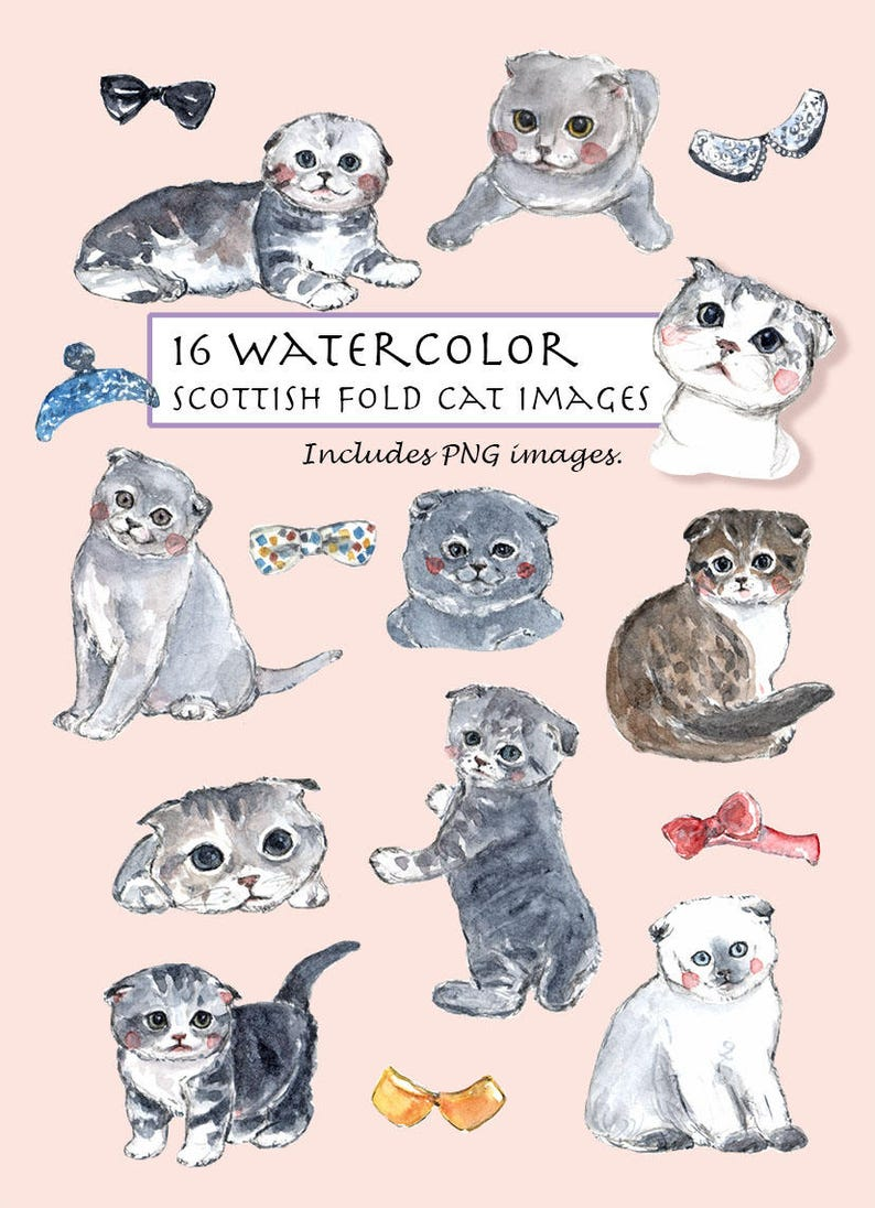 Scottish Fold Cat Set  16 Images  Digital Download  Kittens  Pet  Short  hair  Cat's bow tie