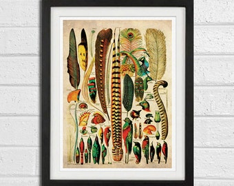 Exotic Feathers Vintage art Print  8x10