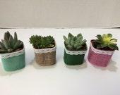 Succulent Plants. 20 Gorgeous Favors with Succulent Plants, Pots with Burlap, Lace and Ribbon Trim.