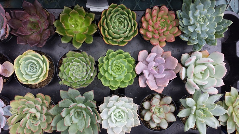 from the small plant section of my shop. You choose 10 plants in pots Ten Small Succulent Plants