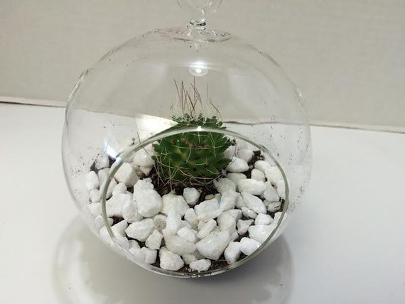 Plant Soil and Gravel  Complete DIY Kit Succulent Plant Small Globe