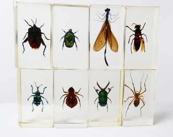 Vintage Real Insect Resin Acrylic Paperweight Taxidermy Entomology Curiosity Oddities Nephilia Spider Scorpio Beetle cicada