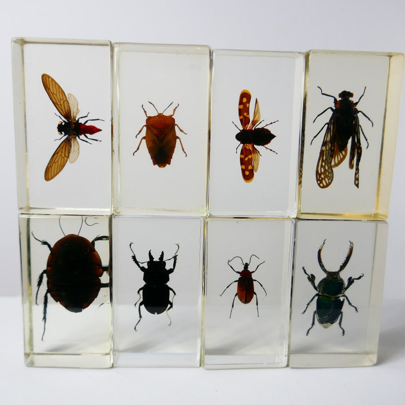 Vintage Real Insect Resin Acrylic Paperweight Taxidermy image 0