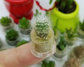 Fluffy - Live Succulent Plant Enclosed in a Tiny Capsule Terrarium Boo-Boo Plant