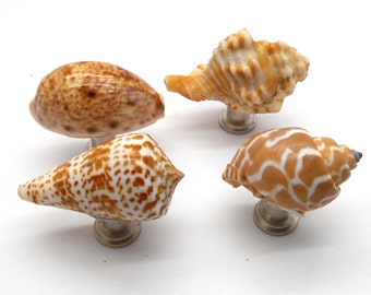 Knobs, Shell Knobs, Cabinet Knobs, Set of 4 Shell Cabinet Knobs - Set of 4, Fixture, Drawer Pull, Bathroom, Kitchen, Sea Shells, Shell Knobs