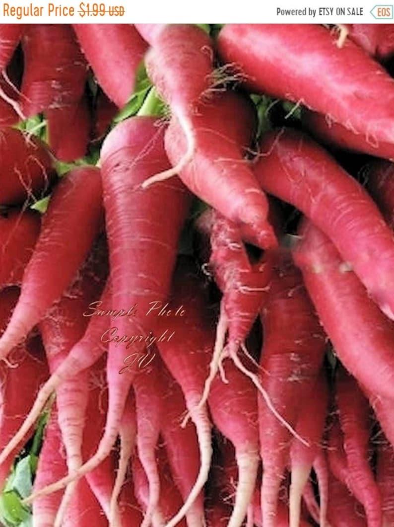 Organic Winter Vegetable Radish Seeds CHINA ROSE 50+ Seeds Heirloom