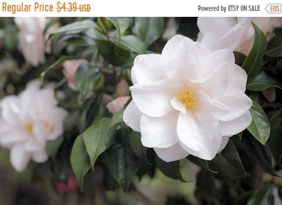 5 tea plant seeds tropical beauty white flower clusters sun etsy image 0 mightylinksfo