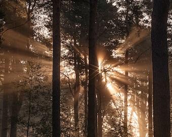 Twin Sunbursts / Light ray / Scottish woodland / Forest Photography / Fine Art Photography / Beautiful light / Sunlight through trees / Zen