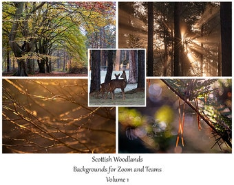 Scottish Woodlands Virtual Meeting Backgrounds Bundle Vol 1. Digital Background images for Zoom, MS Teams & others while working from home.