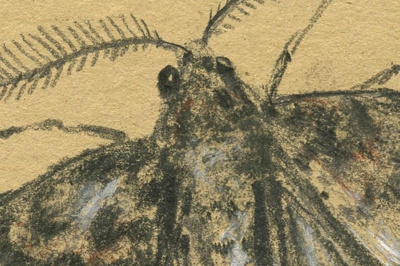 Art by Juan Bosco insect art drawing  print painting art wall moth print Moth drawing moth artwork