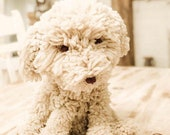 Oliver the pup - Created by Olivewood Designs and Vicu - Handmade Sheep Wool Dog WestiePoo Life Size Puppy