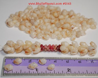 110 pcs Momi shells supply from Niihau #2094