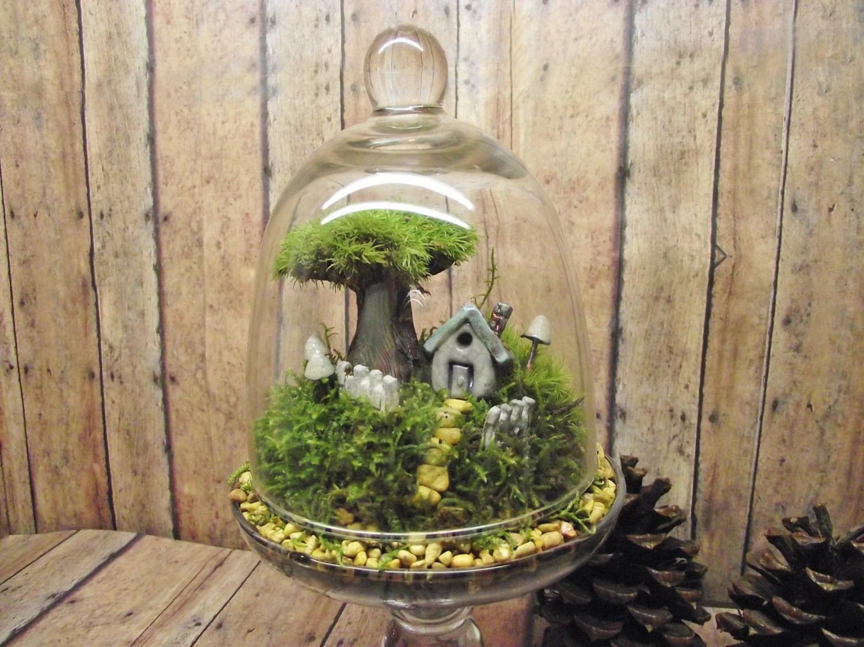 Home sweet home decor live moss terrarium miniature plant - Terrarium decoration miniature ...