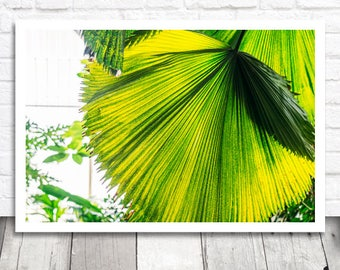 Green Leaf Photo Print, Printable Photo Download, Tropical Wall Art, Tropical Print, Photography Printable Art, Botanical Print