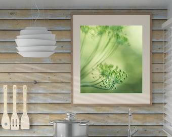 Cottage Kitchen Wall Decor, Dill's Seed Head Photography Print, Nature Photo Print, Green Botanical Art Print
