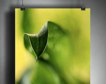 Green Leaf Art Print, Office Artwork, Nature Photography Print, Monochrome Print, Artwork for Walls, Cantedeskia Leaf Photo Wall Decor