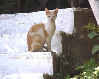 Greece Photography - Cat on White Stairs - Greece - Wall Decor - Mediterranean Fine Art Print