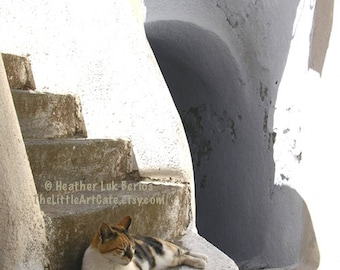 Greece Photography - Cat Resting On Stairs - Santorini - Wall Decor - Greek Mediterranean Fine Art Print