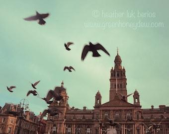 Birds in Flight Photography - Wildlife - Fine Art Photography - George Square Glasgow Scotland