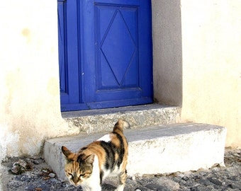 Greece Photography - Cat Blue Door - Santorini - Wall Decor - Mediterranean Fine Art Print