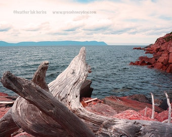 Driftwood Photography - Wall Decor - Water Landscape Fine Art Print Nature Raw Nature Rustic Cottage