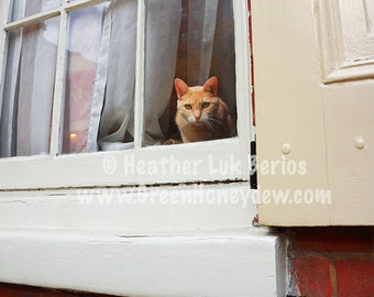 Cat In The Window - Wall Decor - Fine Art Photography Print - White Red Bricks