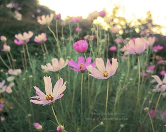 Pink Cosmos - Wall Decor - Fine Art Photography Print, Flower, Floral, Beautiful, Nature, Pretty, Magenta, Wild, Garden