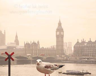 London Photography - Wall Decor - Fine Art Photography Print - Big Ben, River Thames, Seagull, Tower Bridge