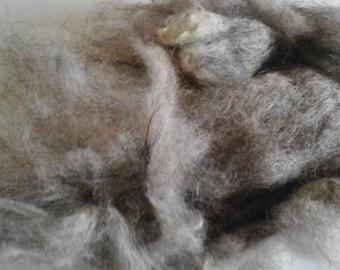 NORTH RONALDSAY washed fleece British native rare breed