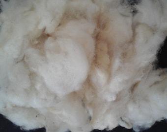 HILL RADNOR washed fleece British rare breed