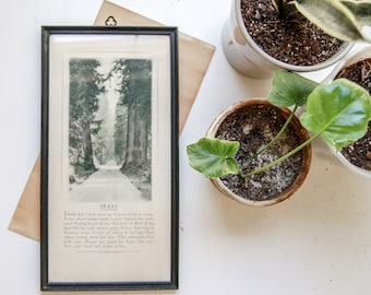 Framed Lithograph Print by Buzza Company -  Motto Tree Poem By Joyce Kilmer With Original Paper Backing