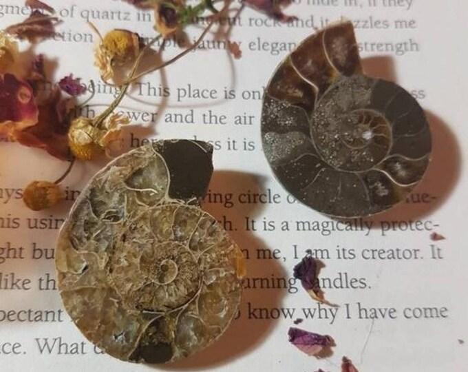 Ammonite Half