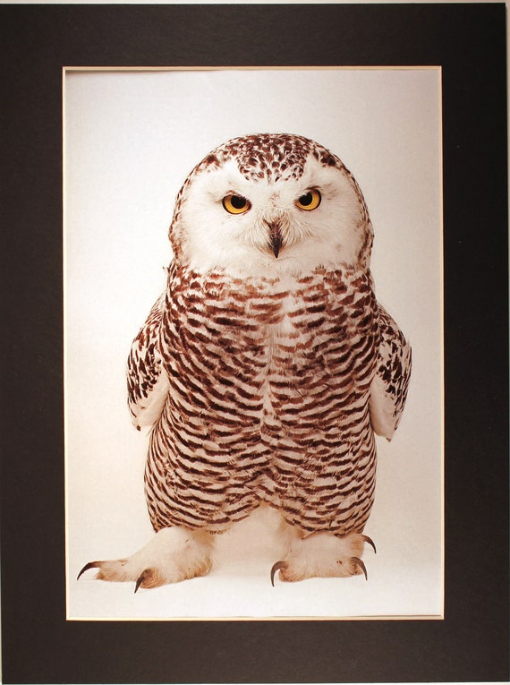 Image of: Campaign Image Adleadsclub Photo Ark Snowy Owl National Geographic Picture With Mat Etsy