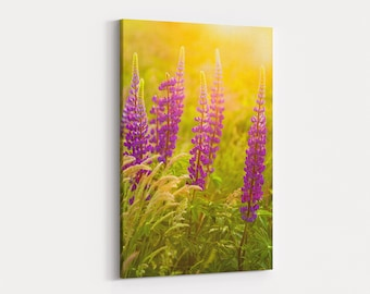 Lupines at Sunset Canvas Wrap - photo of purple lupines waving in the breeze at sunset near Fort Hill in the Cape Cod National Seashore