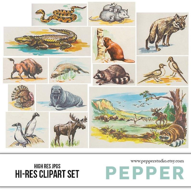 Animals , Retro Clipart , Vintage Illustrations, Forest Animals, Ocean  Animals, School, Kids, Nursery, Bright, High Resolution JPGs