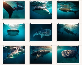 Whale Shark Photo Collection - Nine 4x6 inch (10.16 x 15.24 cm) - DIGITAL PHOTOS -Whale Shark Collage - Instant Download - No Shipping
