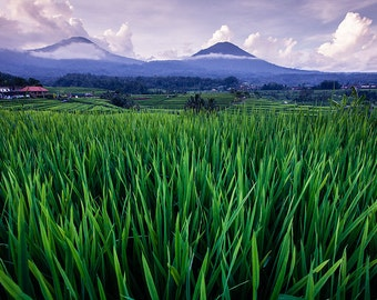 Bali Rice Terraces and Mount Agung - Bali Photos - Travel Photography - Tropical decor - Ocean & Beach Decor - Large Wall Art