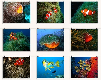 Tropical Fish Coral Reef Collection - Nemo Clown Fish Photos - Large Wall Art Decor - Summer Vacation Decor - Nine 8 x 10 inch Photo Prints