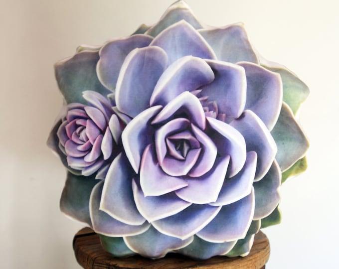 Succulent pillow Echeveria PVN (Perle von Nürnberg)