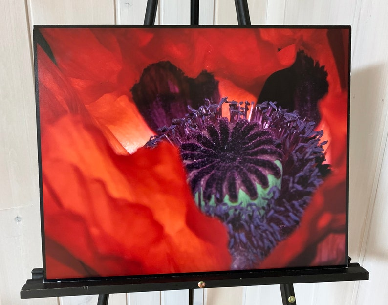Red Poppy image 0