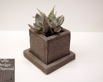 """3"""" concrete pot modern for succulent, cactus, or any small houseplant"""