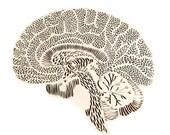 Anatomica Brain Lasercut Wooden Artwork