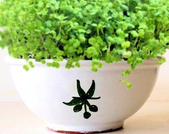 DIY Microgreens Garden Kit in Rustic Italian Farmhouse Olive Bowl Planter - Ceramic Planter Organic Seeds Soil Mix - Vegan Gourmet Gift Kit