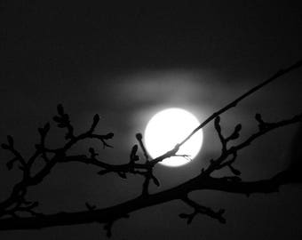 Black and White Nature Collection - Australian Moon