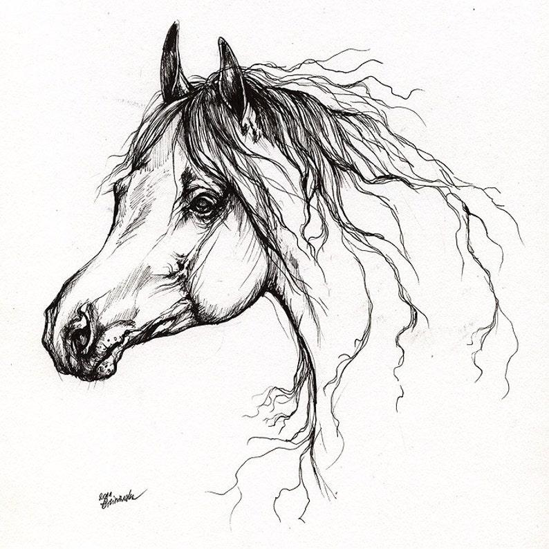 Arabian horse equine art equestrian horse portrait image 0