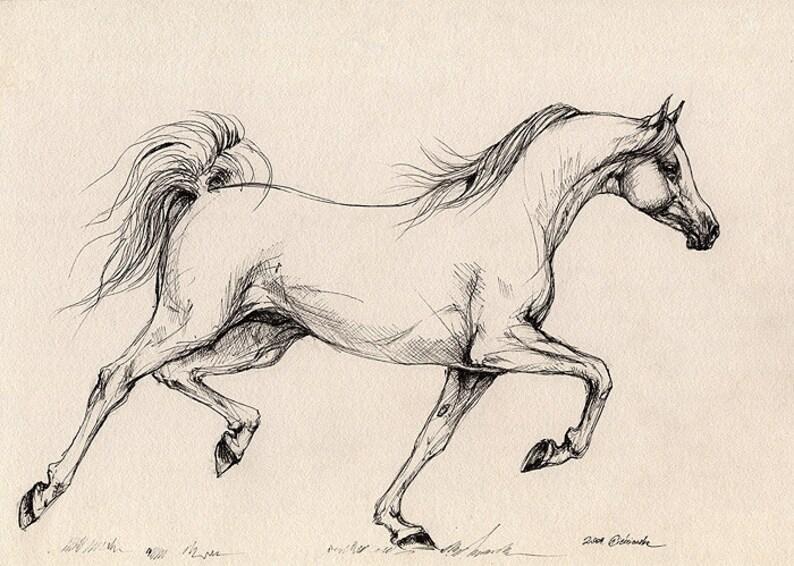 Running grey arabian horse equine art equestrian  original image 0