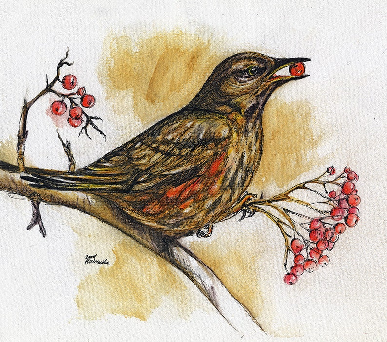 song thrush wildlife wild bird original pen and image 0